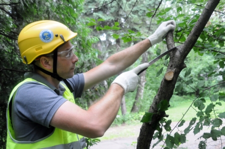 В Феодосии проводят санитарную обрезку деревьев