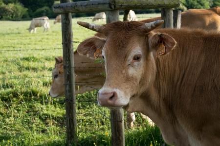 Приём документов на грант: животноводство