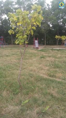 Инвентаризация зелёных насаждений в селе Ближнем
