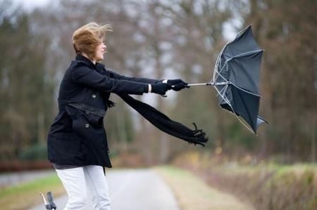 Правила поведения при сильном ветре