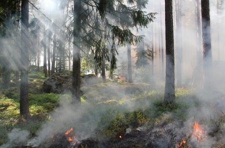 Пожарная опасность в Крыму сохраняется на прежнем уровне