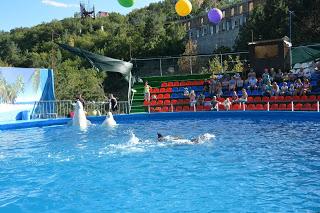 Госкомветеринарии Крыма добивается в суде приостановки работы ялтинского дельфинария