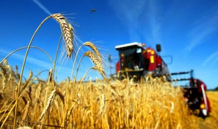 Крымские сельхозпроизводители освоили меньше 40% средств господдержки – вице-премьер