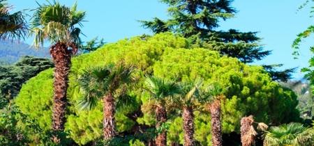 Ученые 11 стран обсудят в научном центре Никитского ботсада инструменты сохранения биоразнообразия растительного мира