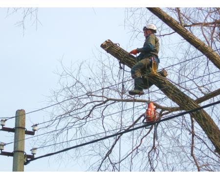 Коммунальщики Феодосии проведут кампанию по ликвидации аварийных деревьев