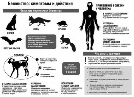За прошедший год случаи укусов людей животными так и продолжаются...