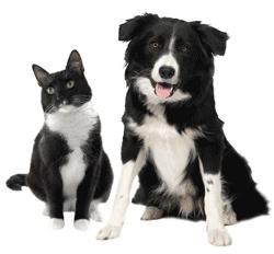 Жителей Крыма в 2017 году заставят регистрировать своих домашних животных