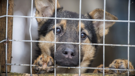 Строительство государственного приюта для животных начнется в Симферополе в следующем году – глава администрации