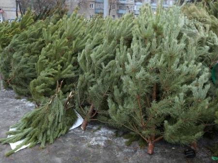 Брянские и пензенские елки составят ассортимент феодосийских елочных базаров в этом году