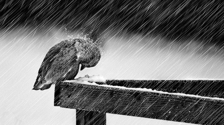 Синоптики прогнозируют на среду сильные дождь, мокрый снег и ветер в Крыму