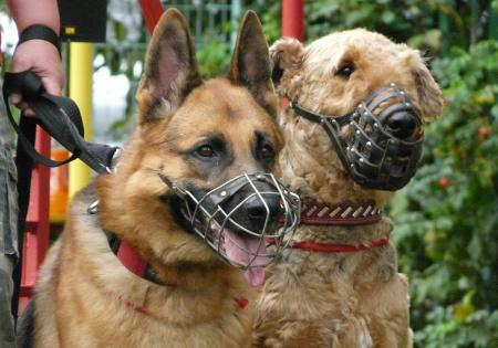 Севастопольское правительство обязало горожан регистрировать домашних собак