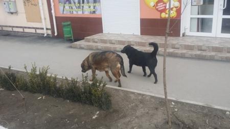 Бродячие собаки в Феодосии все чаще нападают на людей